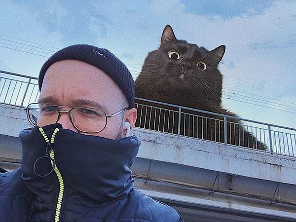 Мужчину из Ростова-на-Дону преследуют гигантские коты, а он и рад: 20+ фото-доказательств | Ярмарка Мастеров - ручная работа, handmade
