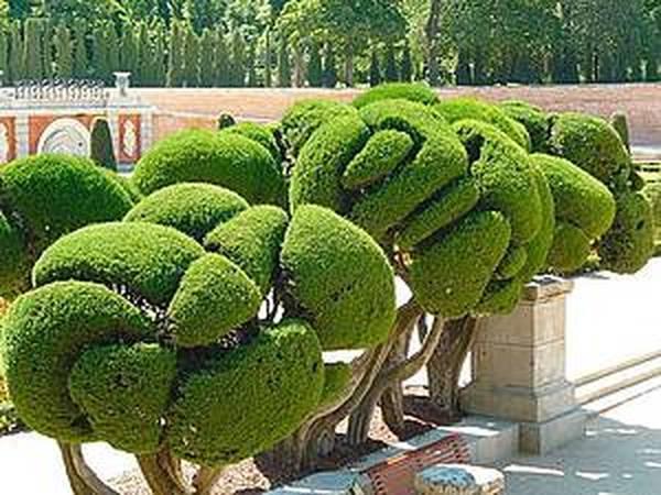 Дерево Счастья своими руками, или Из истории искусства создания топиариев | Ярмарка Мастеров - ручная работа, handmade