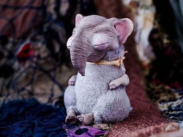 Необычные игрушки Анны Назаренко   Ярмарка Мастеров - ручная работа, handmade