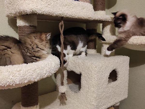 Почему все так любят котиков? | Ярмарка Мастеров - ручная работа, handmade