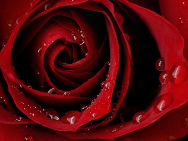 Красный цвет — значение | Ярмарка Мастеров - ручная работа, handmade