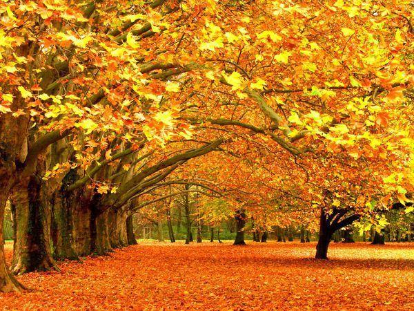 Акция! Золотая осень завершается! | Ярмарка Мастеров - ручная работа, handmade