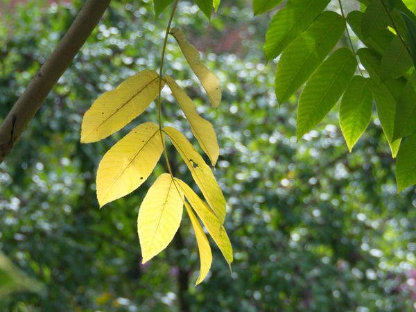 Как сделать интересный фон для композиции из осенних листьев. Три варианта из папье-маше   Ярмарка Мастеров - ручная работа, handmade