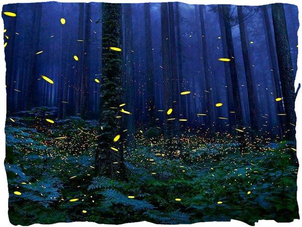 «Ведьмины травы»: парфюмерный оберег! | Ярмарка Мастеров - ручная работа, handmade