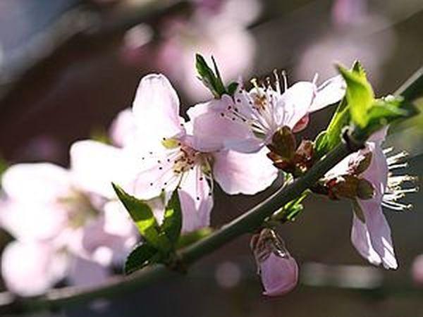 Весна! | Ярмарка Мастеров - ручная работа, handmade