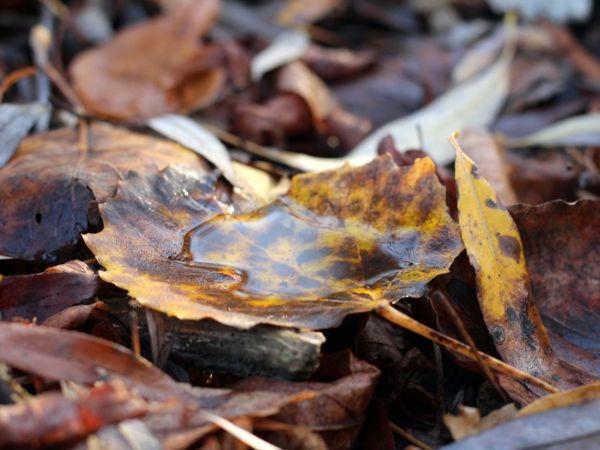 Осенний гербарий | Ярмарка Мастеров - ручная работа, handmade
