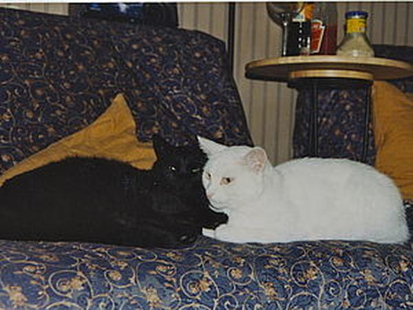 Кошачьи истории нашего дома, часть вторая: черно-белое кино | Ярмарка Мастеров - ручная работа, handmade
