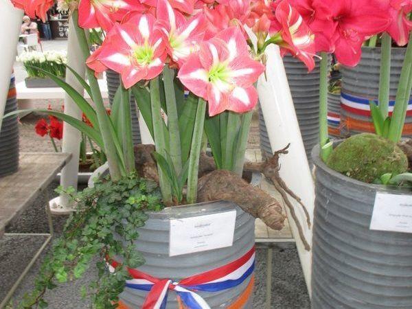 Цветы из Амстердама | Ярмарка Мастеров - ручная работа, handmade