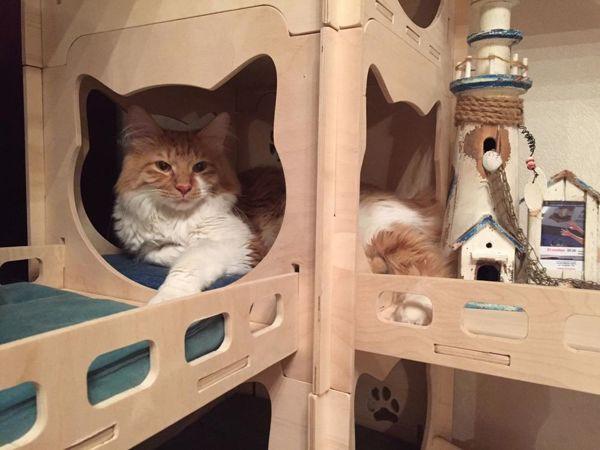 Котиками можно любоваться бесконечно!   Ярмарка Мастеров - ручная работа, handmade