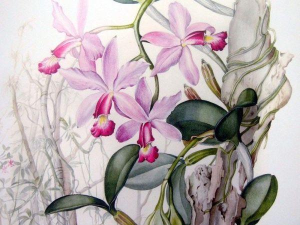 Жанры ботанического искусства. Часть 2 | Ярмарка Мастеров - ручная работа, handmade