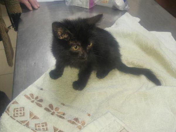 Черный котенок! Нужны средства на лечение! | Ярмарка Мастеров - ручная работа, handmade