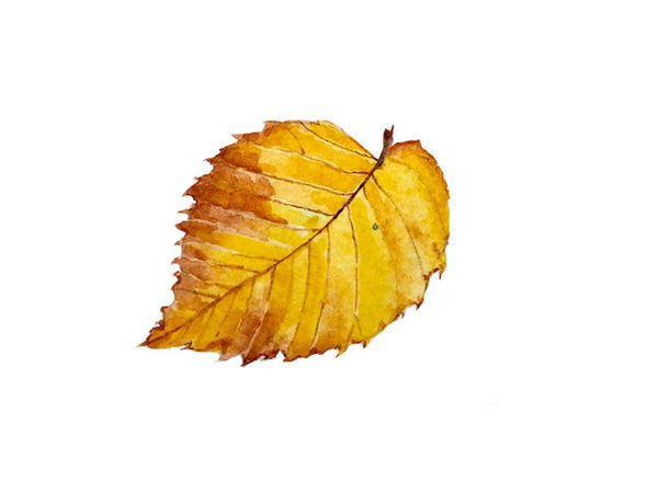 Drawing an Autumn Leaf with Watercolours | Livemaster - handmade