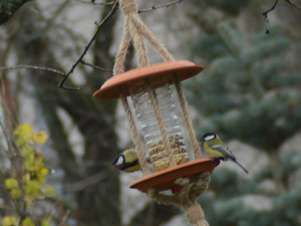 How to Make Simple Bird Feeders   Livemaster - handmade