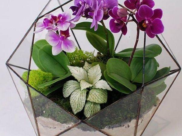 Как ухаживать за флорариумом с Орхидеей | Ярмарка Мастеров - ручная работа, handmade