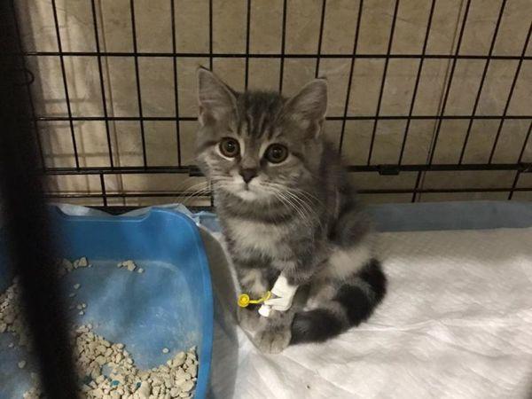 Срочный сбор котенку с ФИП! | Ярмарка Мастеров - ручная работа, handmade