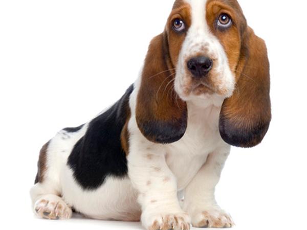А у вас есть собака?   Ярмарка Мастеров - ручная работа, handmade