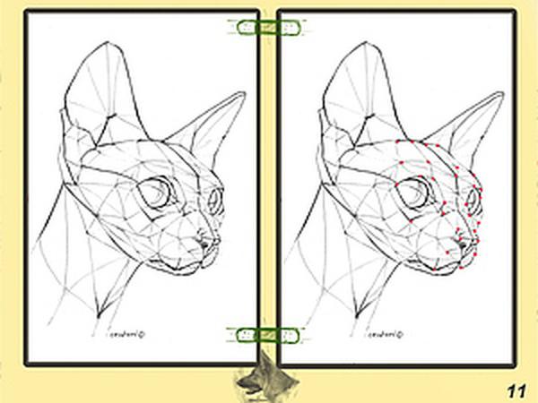 Урок графики: построение головы кошки | Ярмарка Мастеров - ручная работа, handmade