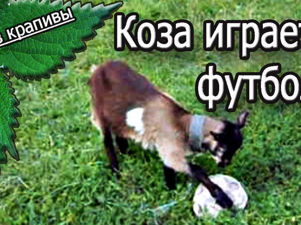 Коза, гол и футбол!   Ярмарка Мастеров - ручная работа, handmade
