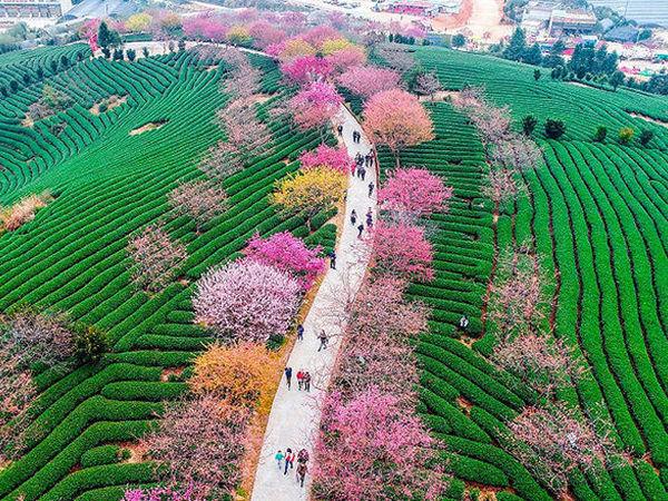 16 мгновений весны — цветение сакуры на снимках   Ярмарка Мастеров - ручная работа, handmade
