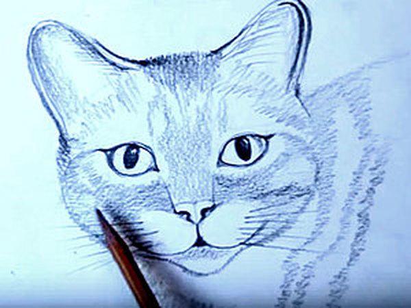 Уроки рисования для начинающих: рисуем кошку карандашом поэтапно   Ярмарка Мастеров - ручная работа, handmade