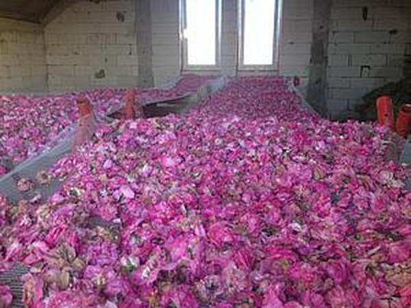 Розовое варенье ( рецепт)   Ярмарка Мастеров - ручная работа, handmade