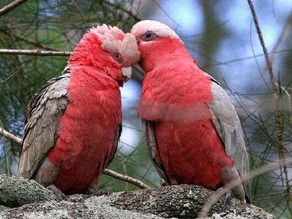Сказочная планета попугаев | Ярмарка Мастеров - ручная работа, handmade