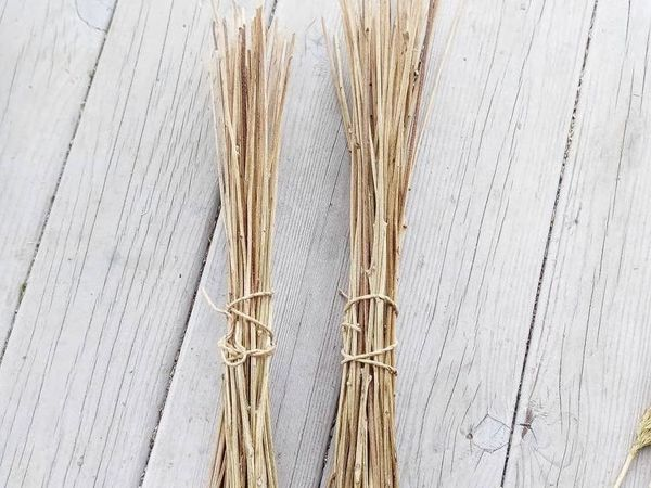 Тростинки для доращивания (рудбекия)   Ярмарка Мастеров - ручная работа, handmade