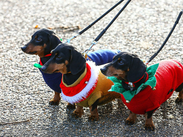 Dachshunds Invasion: Hundreds Of Dogs In Costumes Took Part In London's Hydepark Sausage Walk Festival | Livemaster - handmade