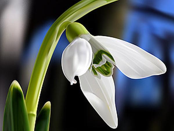 Подснежник - символ весны, надежды и чистоты! | Ярмарка Мастеров - ручная работа, handmade