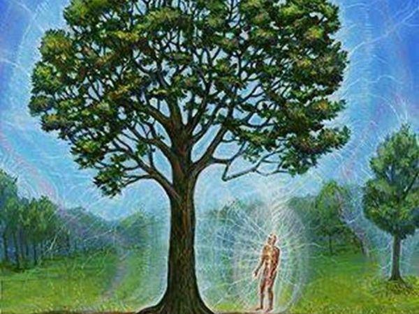 Биоэнергетика деревьев. Лечение энергией Деревьев   Ярмарка Мастеров - ручная работа, handmade