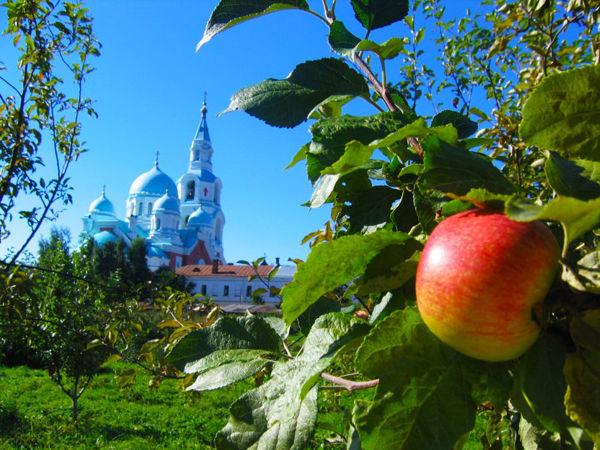 Удивительные яблоневые сады Валаамского монастыря | Ярмарка Мастеров - ручная работа, handmade