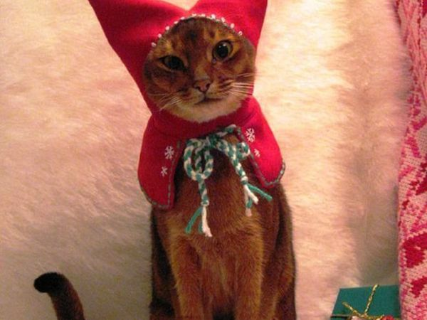 Christmas Cats! And a Little About the Safety of Pets During the Holidays | Livemaster - handmade