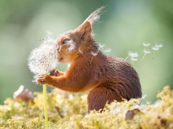 Дико смешные и похожи на нас: названы финалисты конкурса забавных снимков животных Comedy Wildlife Photography Awards | Ярмарка Мастеров - ручная работа, handmade