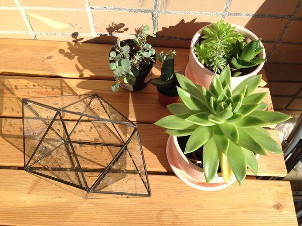 Сад в горшке — делаем флорариум своими руками | Ярмарка Мастеров - ручная работа, handmade