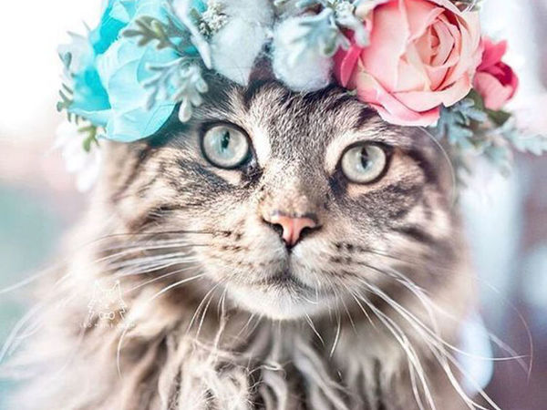 Cats, Dogs, Flowers: Unusual Photo Portraits of Beloved Pets | Livemaster - handmade