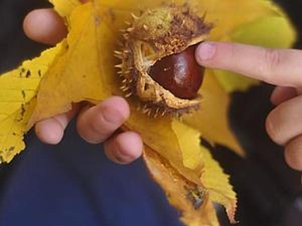 Солнце в листьях... | Ярмарка Мастеров - ручная работа, handmade