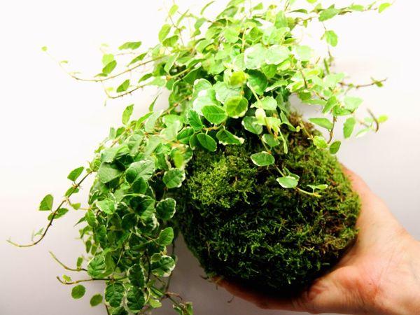 Мастер-класс «Лесной мох в интерьере». Фитодизайн в вашем доме и офисе | Ярмарка Мастеров - ручная работа, handmade
