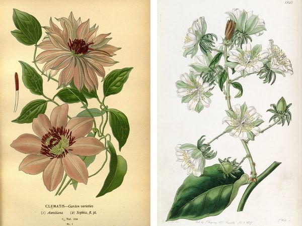 Иллюстрации растений и насекомых | Ярмарка Мастеров - ручная работа, handmade
