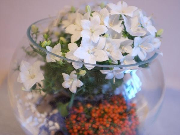 Создаем мини-сад за стеклом — подарок для новобрачных | Ярмарка Мастеров - ручная работа, handmade