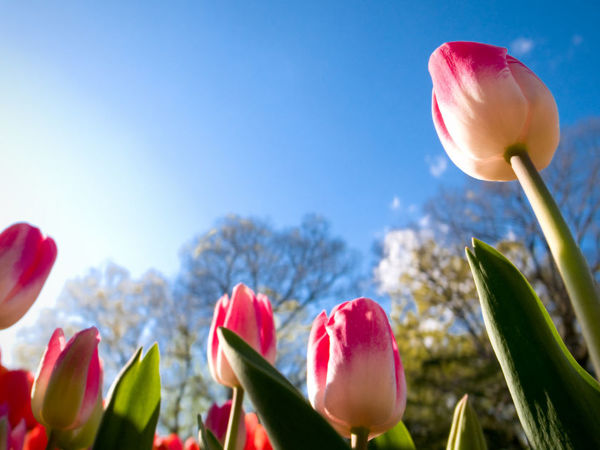 Аукцион « Праздник весны, цветов и любви»весны, цветов и любви» | Ярмарка Мастеров - ручная работа, handmade