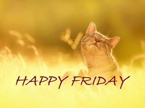 Happy Friday! 25% скидка на готовые броши!   Ярмарка Мастеров - ручная работа, handmade