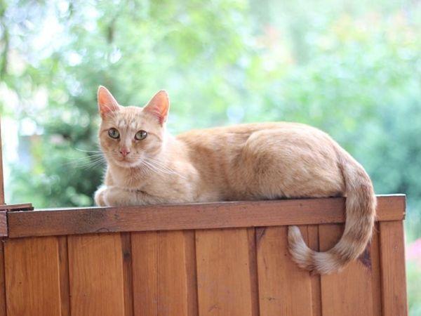 Благотворительный аукцион «Кошачий ангел» открыт! | Ярмарка Мастеров - ручная работа, handmade