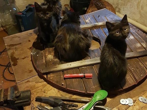 Черные коты приносят удачу и защищают от воров | Ярмарка Мастеров - ручная работа, handmade