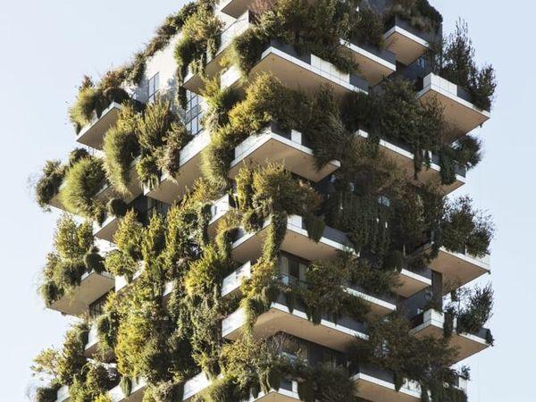 Лес на балконе жилого дома — как это возможно? | Ярмарка Мастеров - ручная работа, handmade