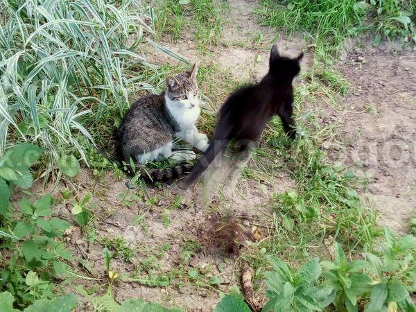 Котята ищут дом! | Ярмарка Мастеров - ручная работа, handmade