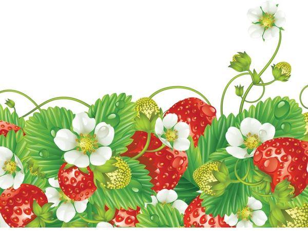 процессе картинки для сайта ягодки забавные фото, взрослые