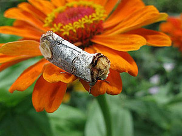 Фото моих бабочек - подружек | Ярмарка Мастеров - ручная работа, handmade