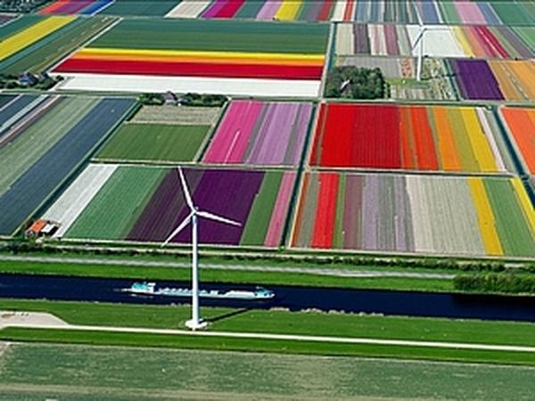 Поля из Тюльпанов в Нидерландах и еще 10 потрясающих фотографий. | Ярмарка Мастеров - ручная работа, handmade