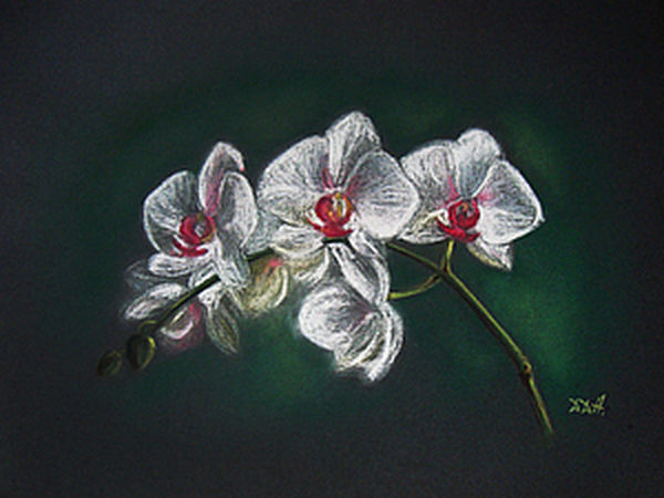 Tutorial on How to Paint Orchids with Pastel | Livemaster - handmade
