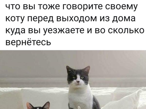 Про собак и котов | Ярмарка Мастеров - ручная работа, handmade